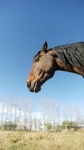 wild horse alberta