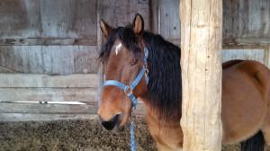 Wild horse halter