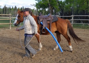 Sharon leading her gelding, Jet. Her focus and direction is obvious and Jet is following perfectly.