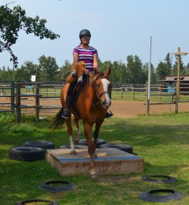 amazing horse country platform obstacle course