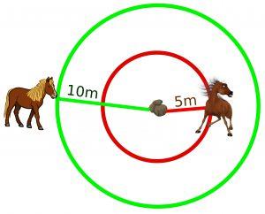 horse fear