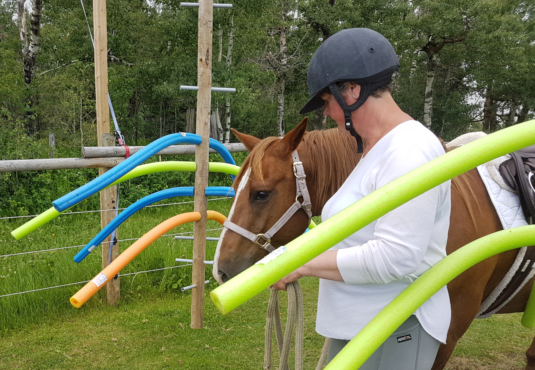 horse obstacle challenge