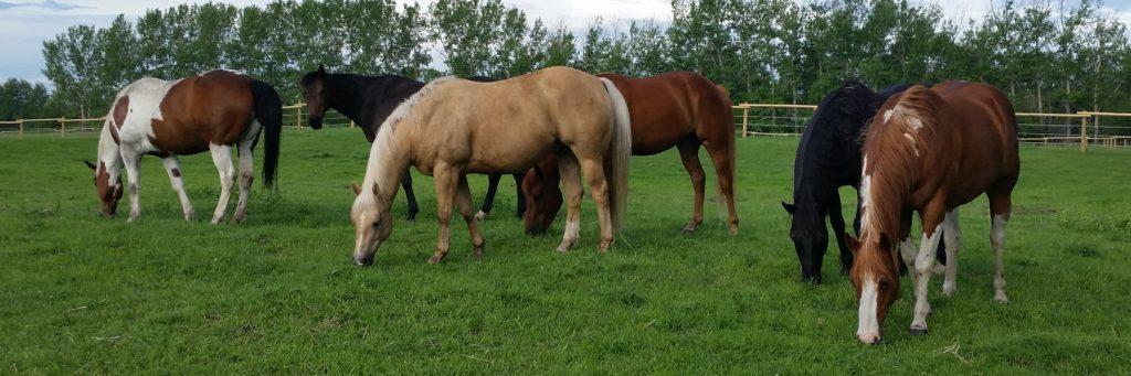 horses in pasture herd