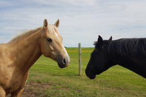 horse conversation