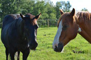 horse sense - relations