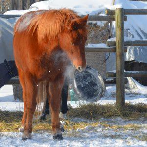 horse sense - feed me!