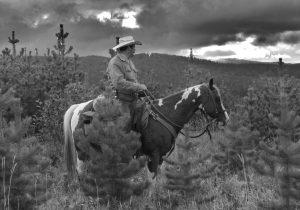horse sense - where are we?
