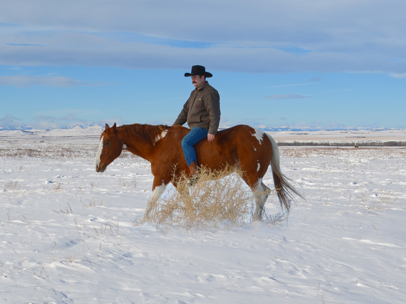 Riding Spud bareback without reins or a halter.