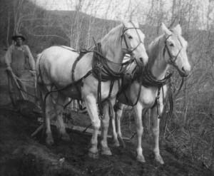 Trail Rangers