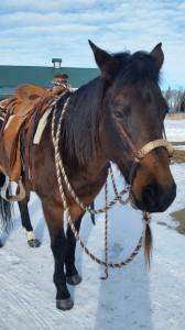 horsemanship release