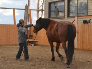 horsemanship release wildie
