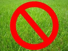 no grass