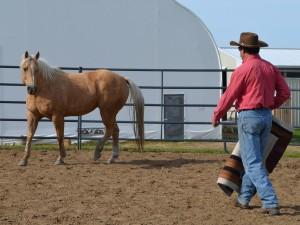 horsemanship pressure