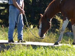 Horse Training - Bridge
