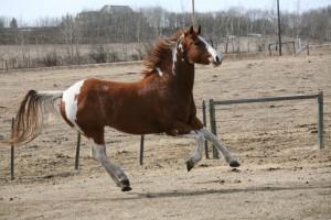 horse panic
