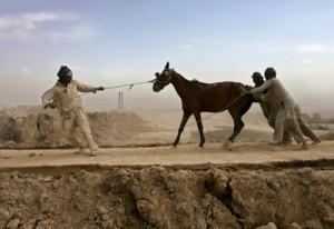 stubborn horse