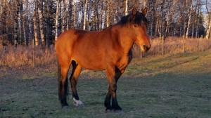 wild horse mustang alberta