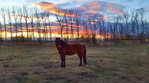 wild horse sunset alberta
